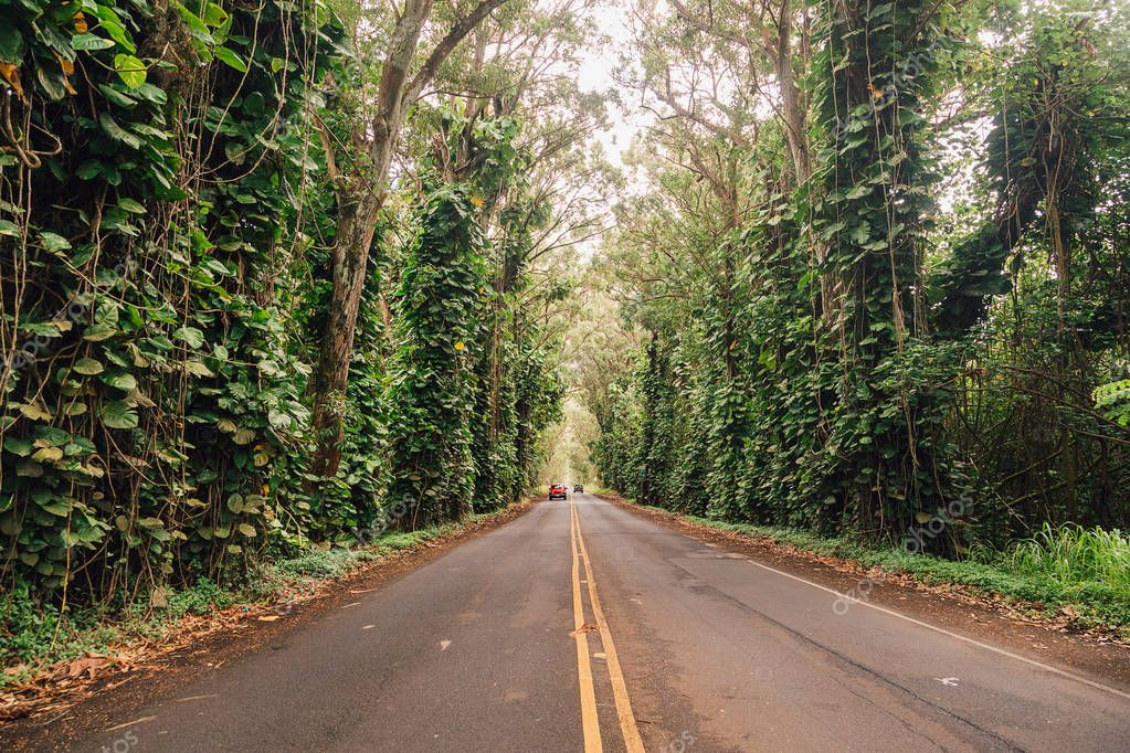 Road lane, walkway path with tunnel green trees in forest. Beautiful alley, road in park. way through summer Forest. Kauai island.