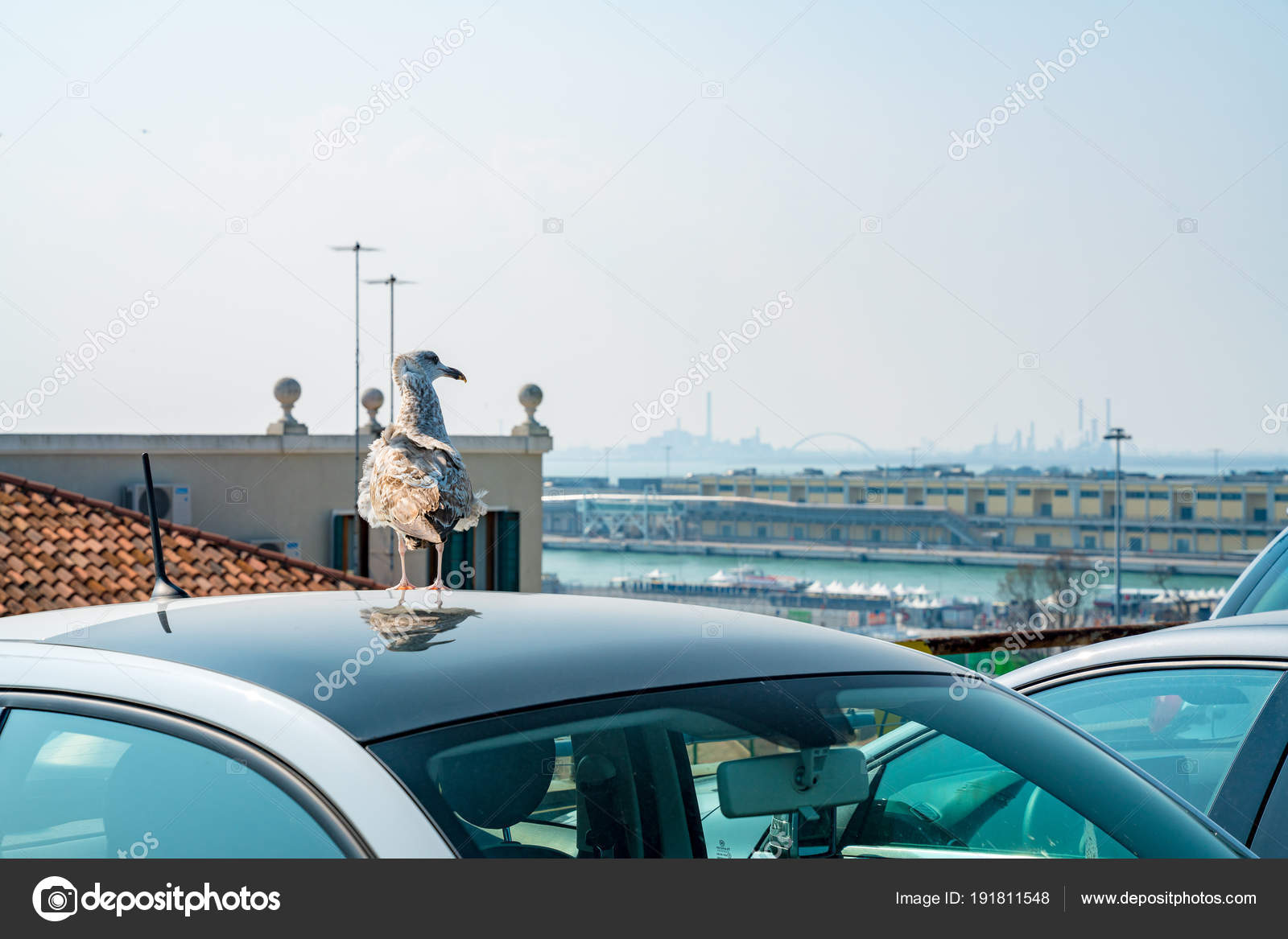 Venice Italy April 2018 Wild Gull Sitting Car Venice Watching ...
