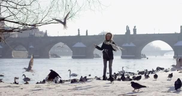 Zpomalený pohyb krmení ptáků Karlův most přes řeku Vltavu v hlavním městě Česka, Praha