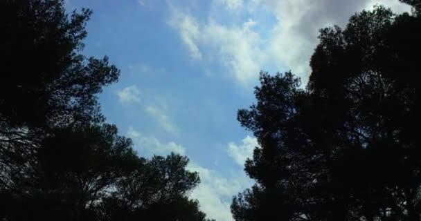 Akční video záběry z jízdy v lese. Pohled do horní části stromů v rychlé Zpomalený pohyb