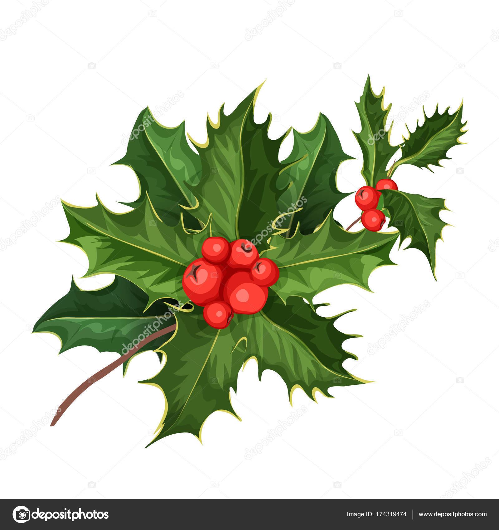Immagini Agrifoglio Di Natale.Vector Foglie Di Leccio Vischio Agrifoglio Di Natale
