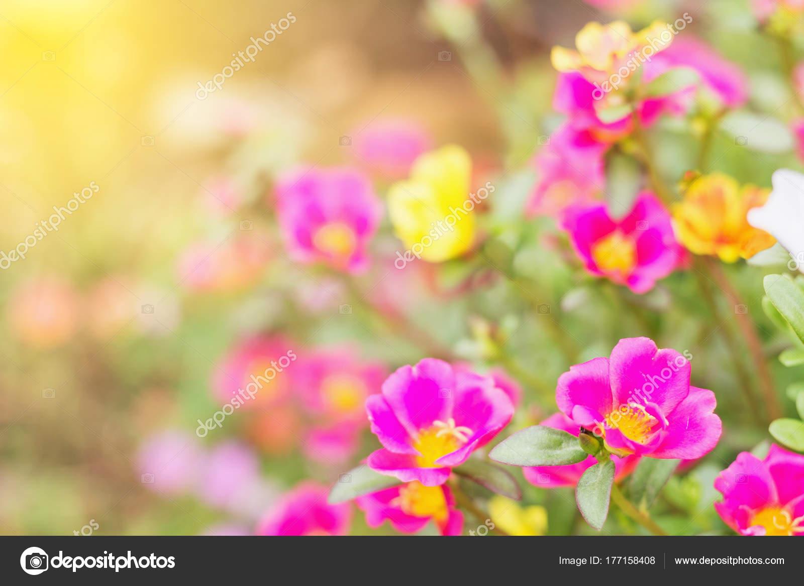 Schöne Blumen Garten Mit Sonnenlicht Feder Stockfoto