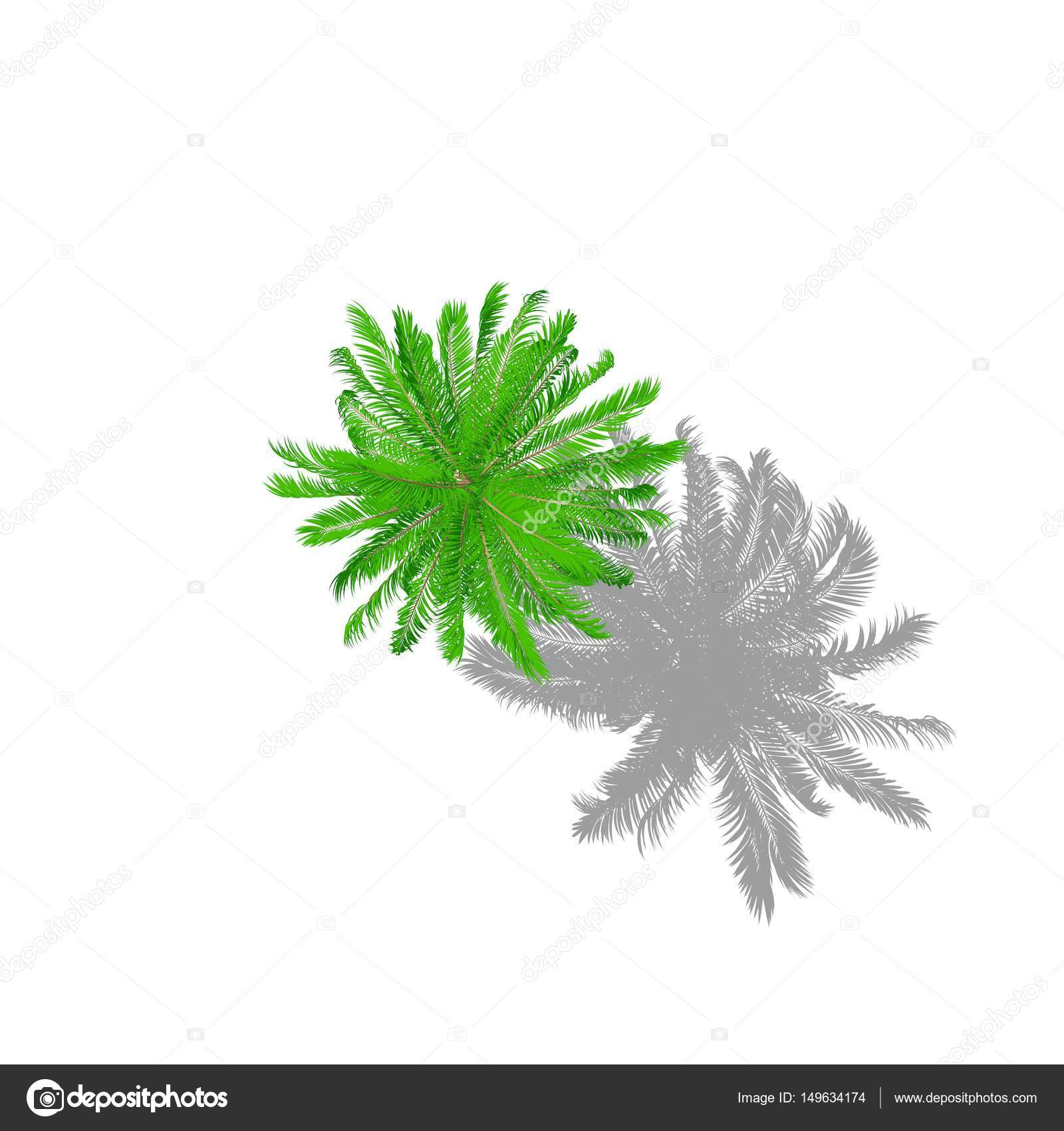 Palm Tree Isolated On White Background Cartoon Style Top View Stock Photo C Eestingnef 149634174 The owner of this domain has not yet uploaded their website. https depositphotos com 149634174 stock photo palm tree isolated on white html