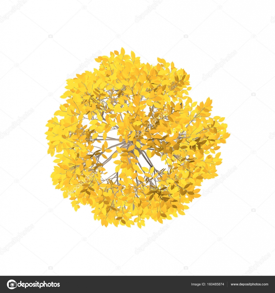 Aspen tree  Isolated on white background  Top view  — Stock Vector