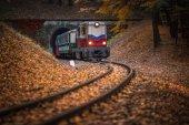 Fényképek Budapest, Magyarország - gyönyörű őszi erdőben a lombozat és a régi színes vonat jön ki a magyar erdőben alagút