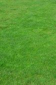 Fotografie Fotografie lokality s i ostříhané zelené trávě. Trávník nebo alej čerstvé zelené trávy