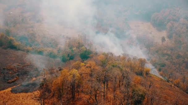 Smog von Waldbränden. Entwaldung und Klimakrise. Giftiger Dunst von Regenwaldbränden. Luftbild 4k.