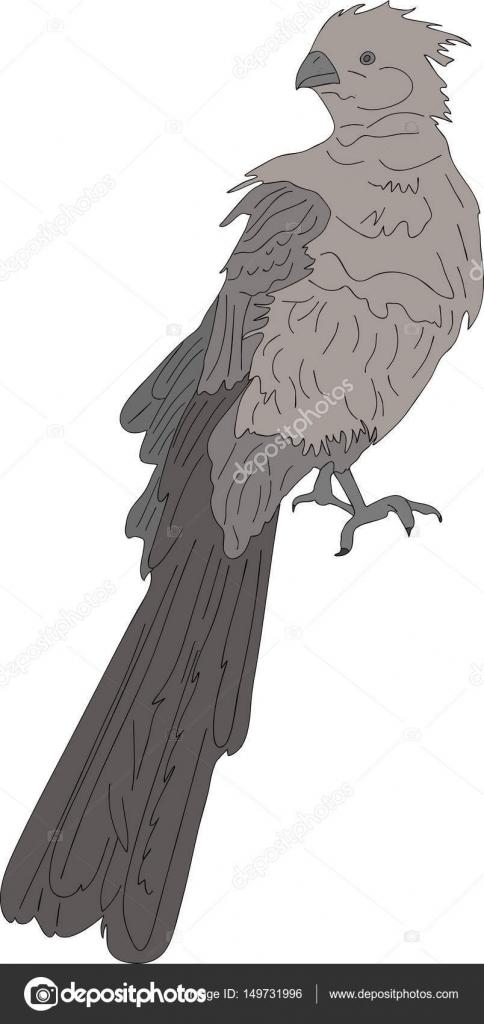 Μεγάλο πουλί γυμνός