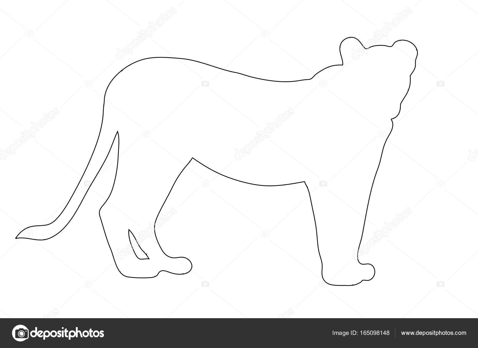 Line Drawing Of Lion : Outline of an african female lion u stock vector friedemeier