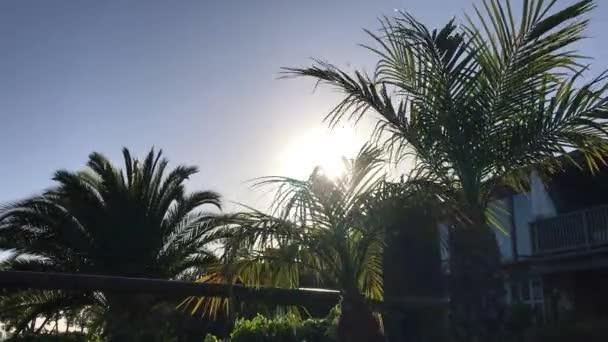 pohled na palmy proti obloze