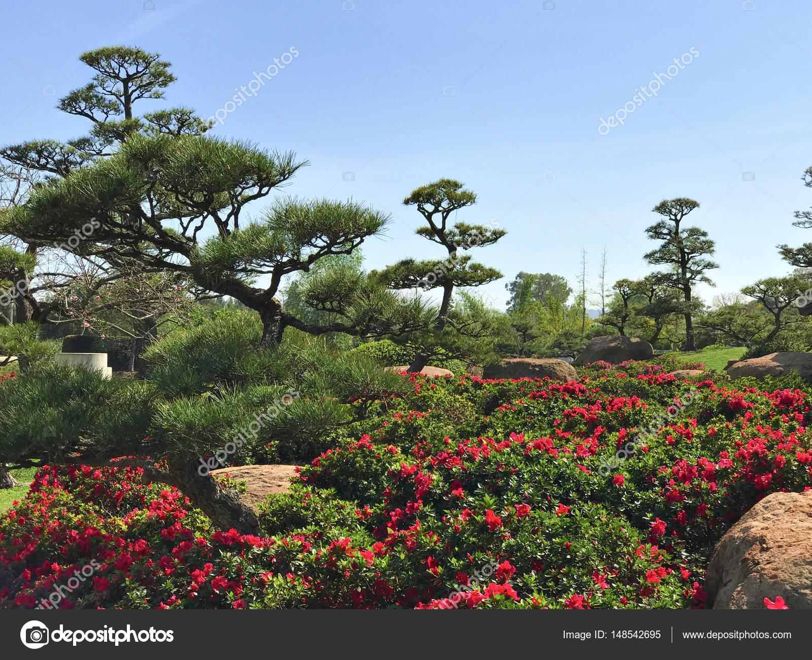 Schöne Blumen Und Bäume Im Japanischen Garten Stockfoto Flatbox