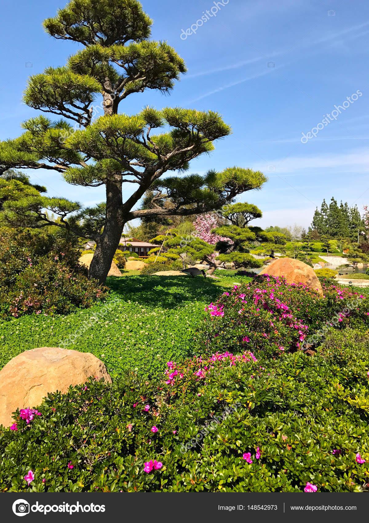 Schöne Blumen und Bäume im japanischen Garten — Stockfoto © flatbox ...