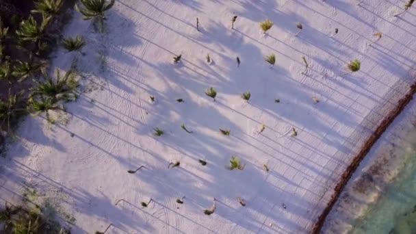 Shora dolů letecký pohled na posouvání přes tropické kokosové palmy na pláži s bílým pískem v pozdně odpoledním stínu na ostrově v Karibském moři. Krásný západ slunce. DRONY shot