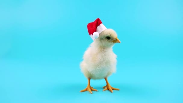 Cute young rooster in red Santa Claus hat, symbol of New Year 2017, ready to be keyed