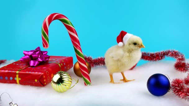 happy chinese new year 2017 concept young cock or rooster in santa hat blue - Chinese New Year Video