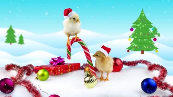 Dvě zábavné malé kohouti (symbol nového roku 2017) v Vánoční dekorace na zimní pozadí s vánoční stromek a sněžení