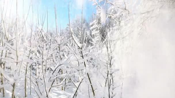 Padající bílý sníh z větví stromů v zimě. Zpomalený pohyb.