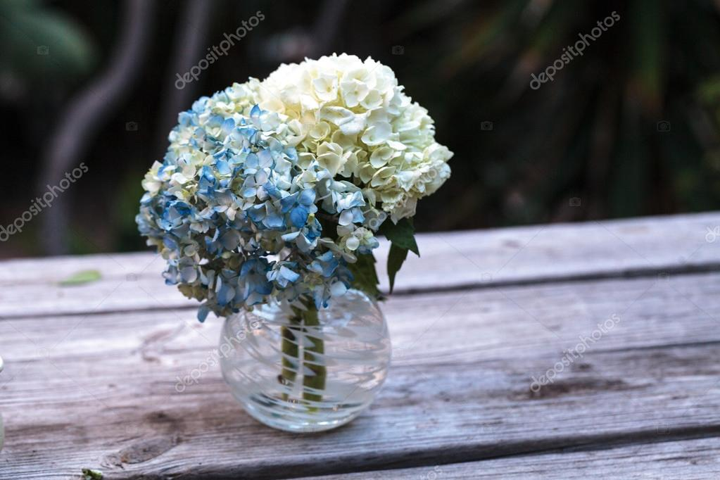 Weiße und Blaue Hortensie Blumen — Stockfoto © stephstarr9363@gmail ...