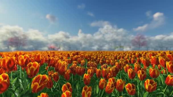 A napfény ellen a kék ég tulipán csoport.