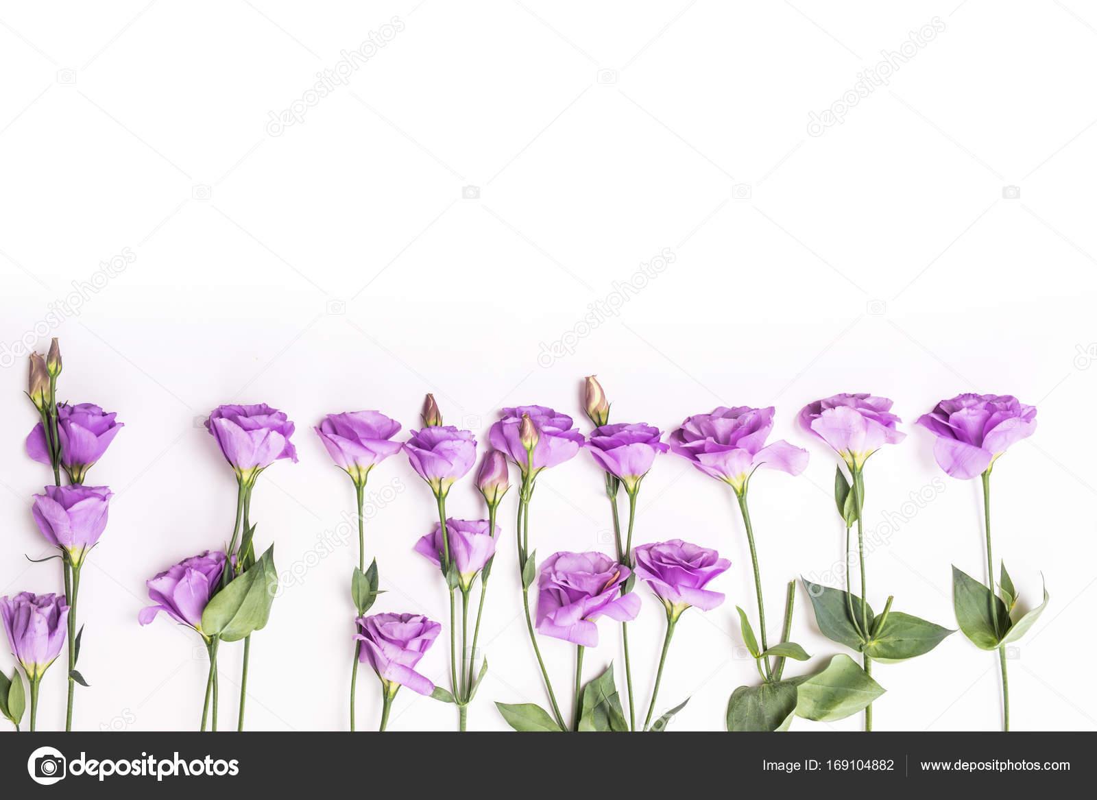 Flores de color púrpura violeta eustoma plano lay marco — Foto de ...