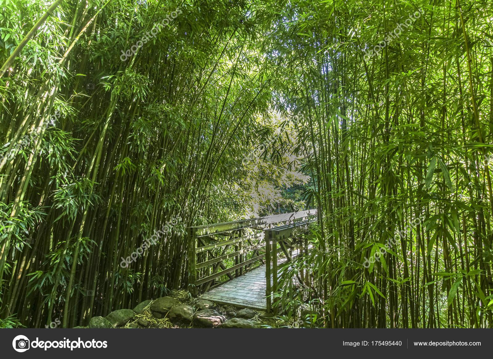 Schonen Weg Durch Uppige Bambuswald Maui Hawaii Stockfoto