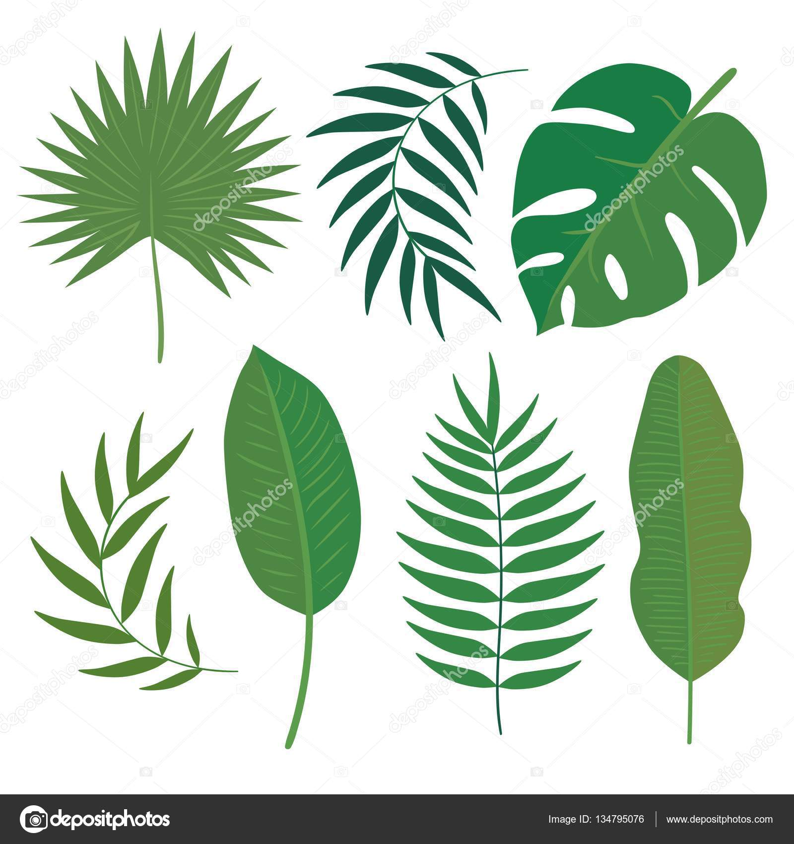 vector set of tropical leaves � stock vector 169 imaginasty