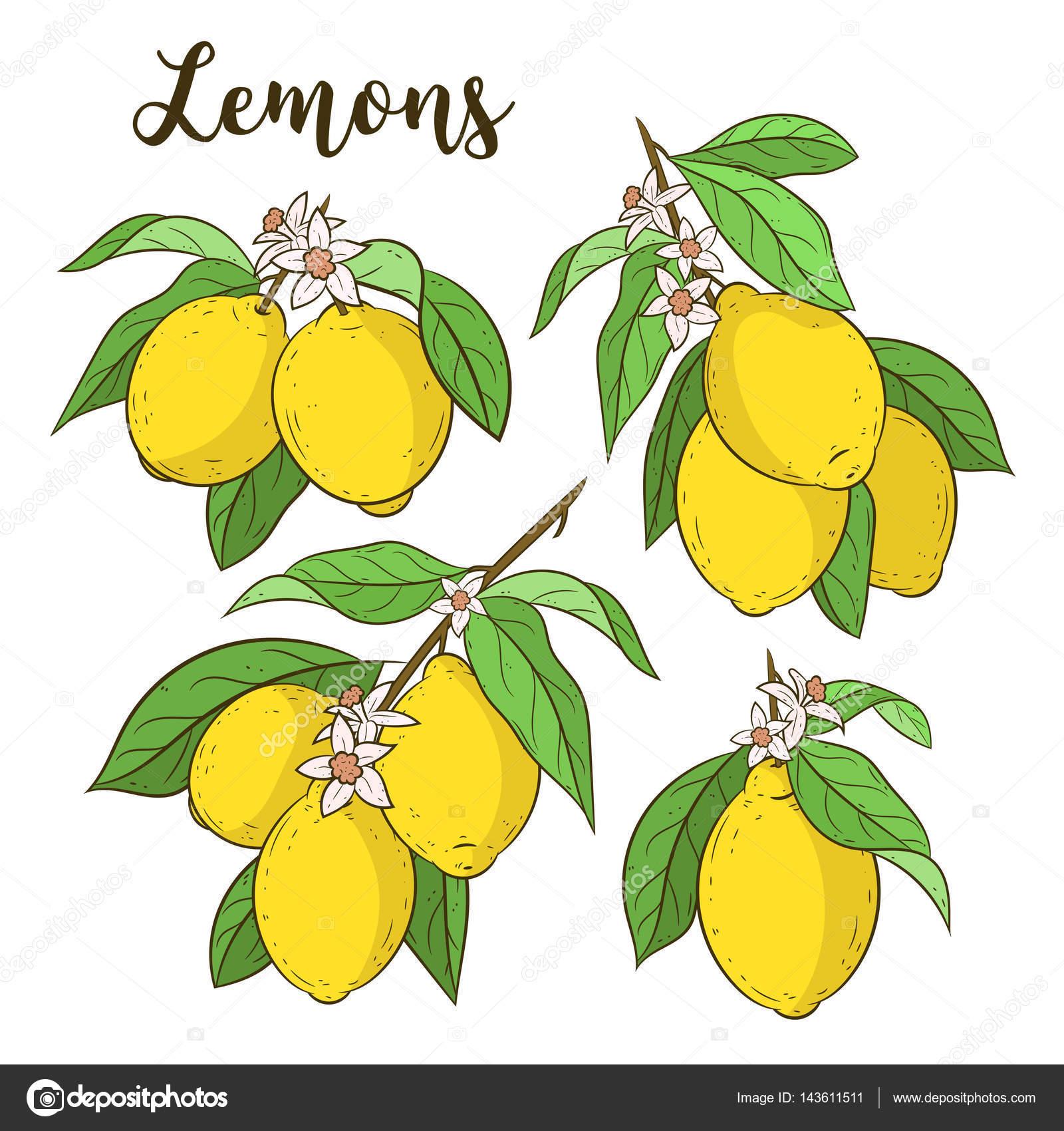 レモンのイラスト果物食べ物素材のプチッチ