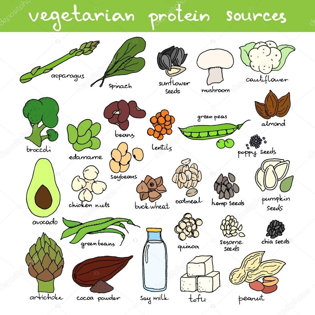 hand drawn vegan protein sources