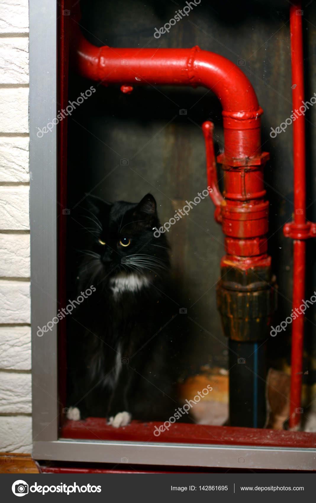 černá kočička červená trubice