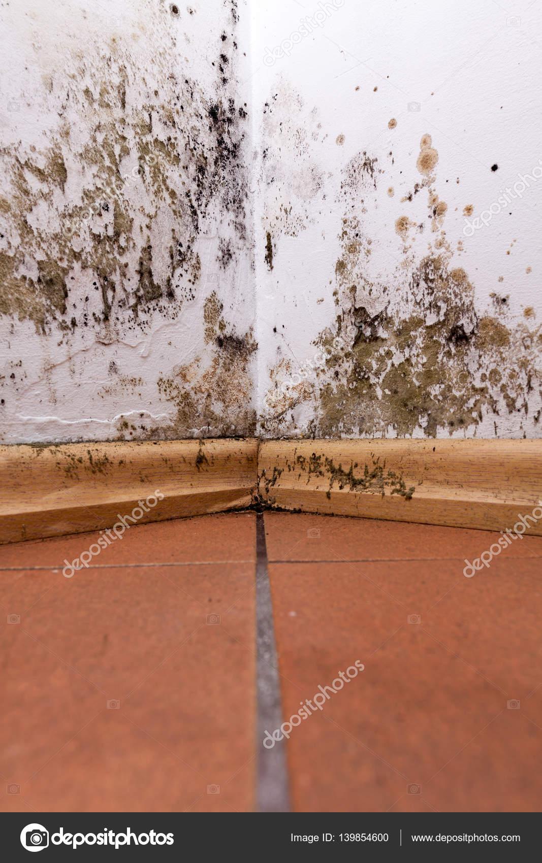 problem mit schimmel im haus — stockfoto © cegli.o2.pl #139854600