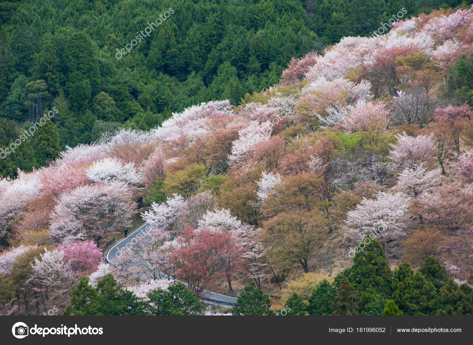Cherry Blossom On Yoshinoyama Nara Japan Spring Landscape Photo By T0pkul3hotmail