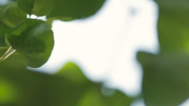 zelená listová zblízka přírodní pozadí