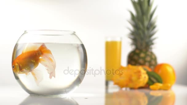 The orange composition consisted of the close-up view of the golden fish swimming in the round aquarium at the blurred background of the kiwano, pineapples, persimmons and glass with orange juice.