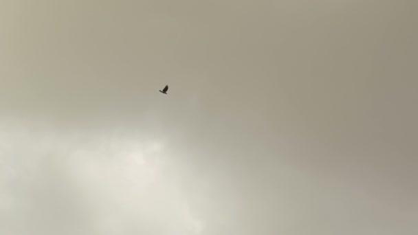 Βρείτε μεγάλο μαύρο πουλί