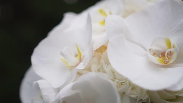 Detailní záběr krásnou kytici bílých květů orchidejí z větru