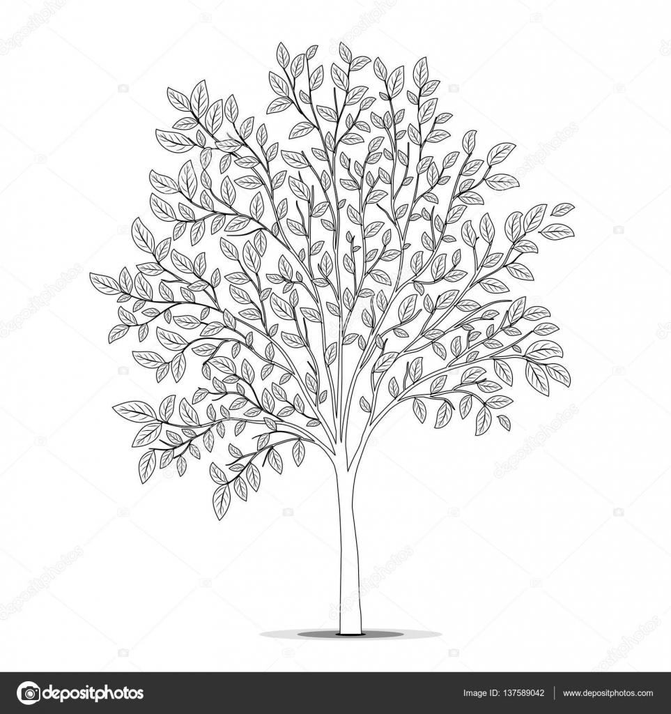 Ağaç Yaprakları Siluet Beyaz Arka Plan üzerinde Ile Boyama Kitabı P