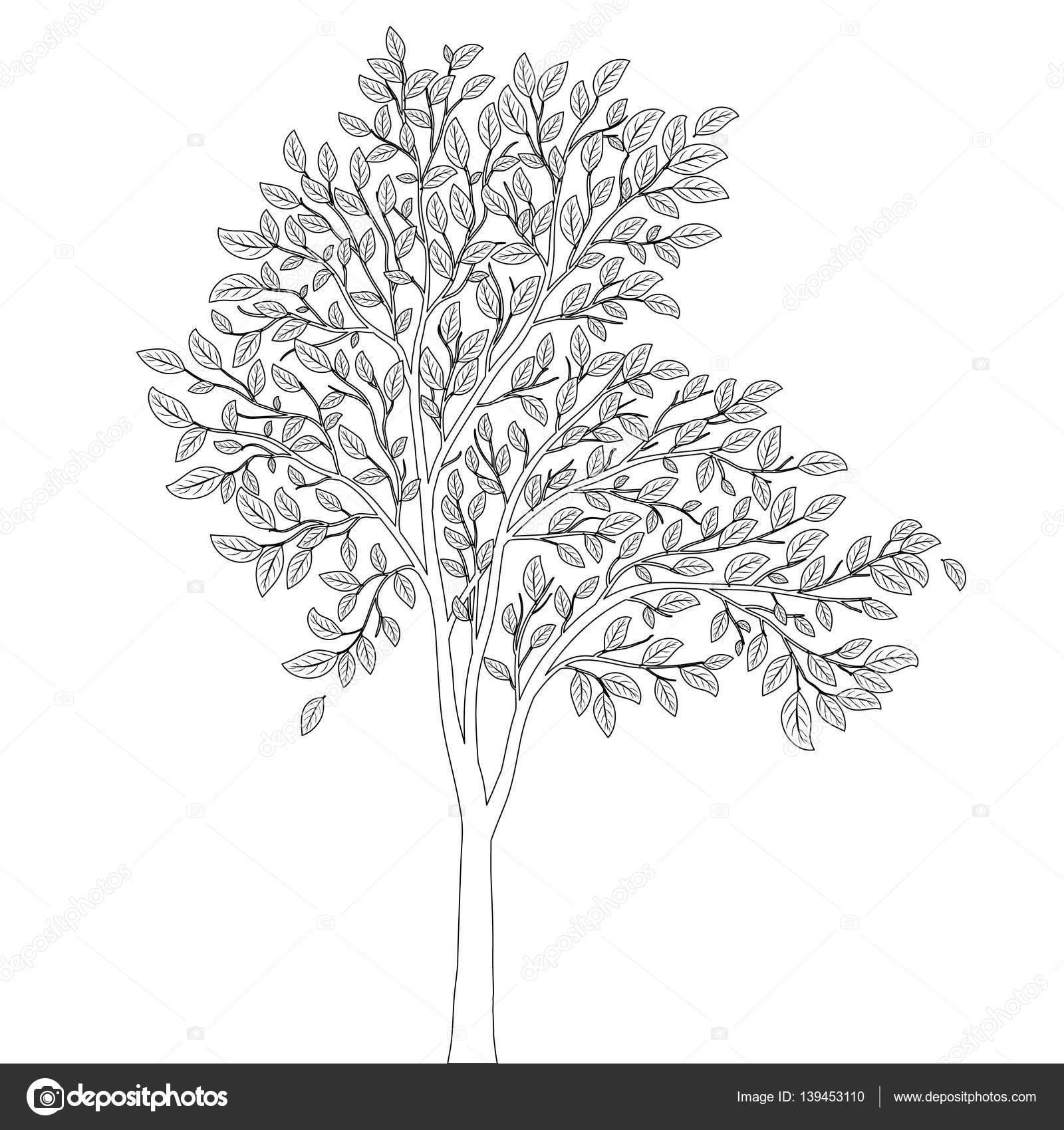 Baum mit Blättern zum Färben von Buch Seite Vektor — Stockvektor ...