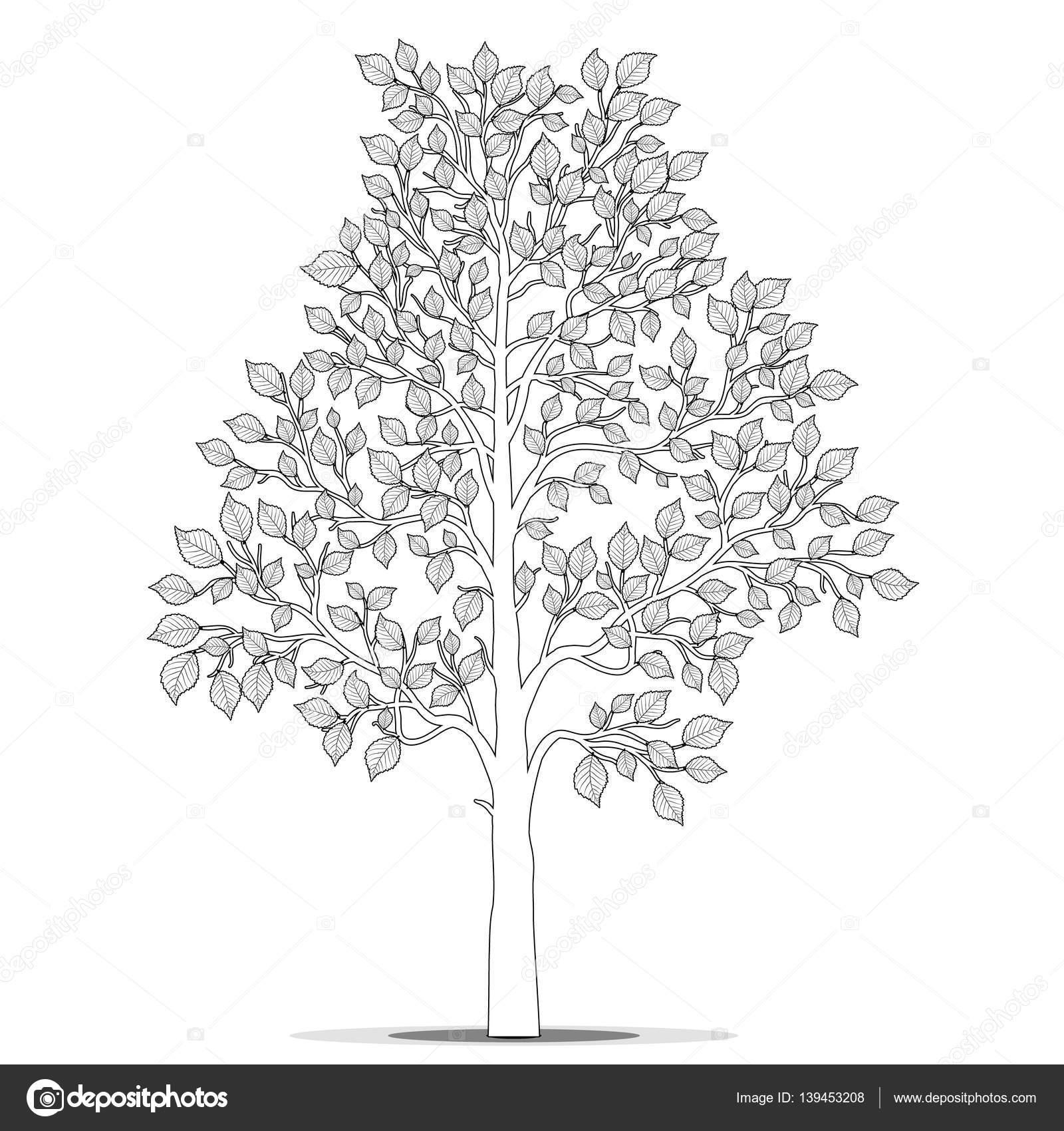 Kitap Sayfa Vektör Boyama Için Yaprakları Ile Ağaç Stok Vektör