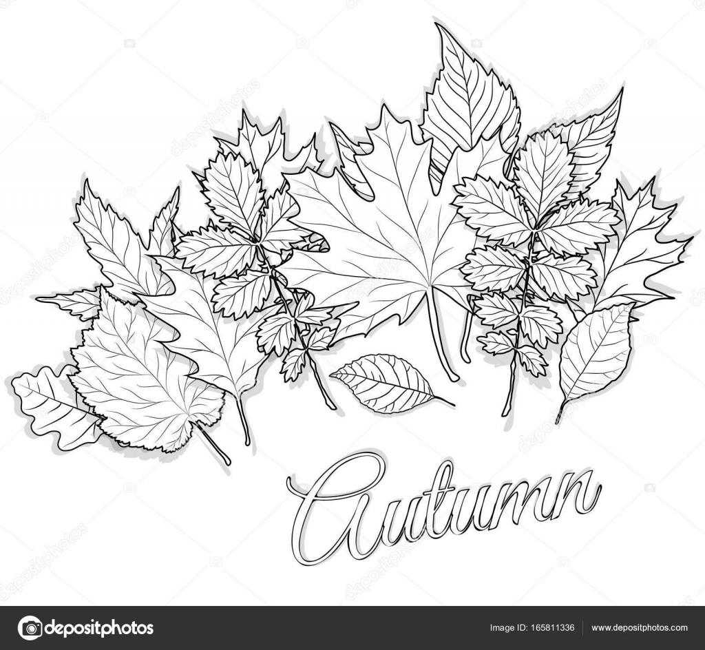 Sonbahar Yaprakları Sayfa Vektör Boyama Için Ayarla Stok Vektör