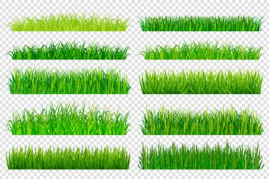 Spring green grass borders isolated on transparent background.