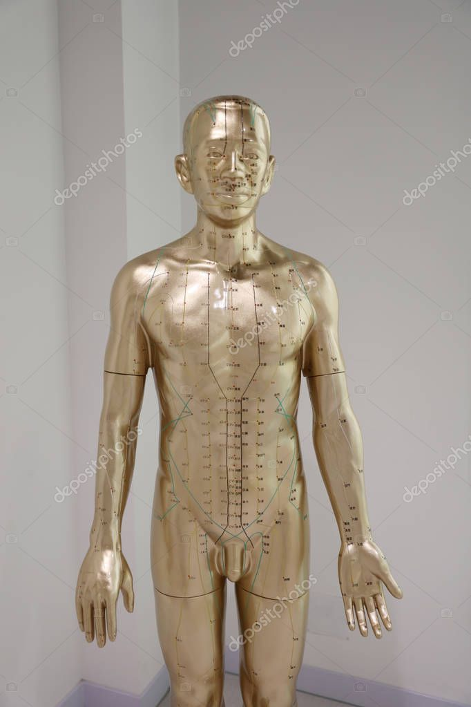 the figure of Oriental Medicine mode