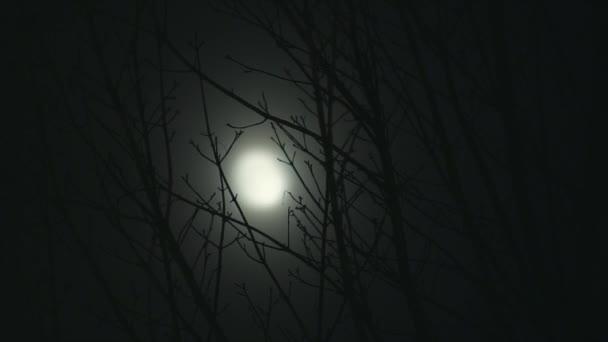 Úplněk v noci stromy