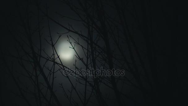 Full Moon at Night Trees