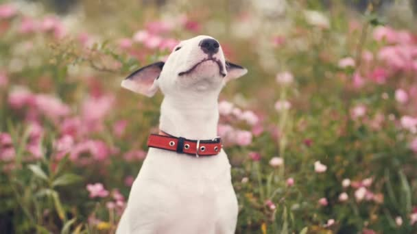 roztomilý pes v květech