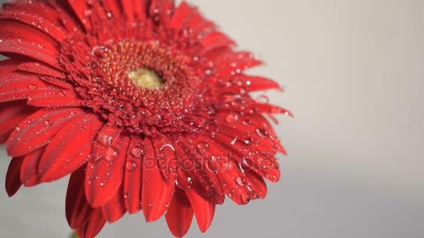 Wassertropfen fallen auf eine Blume