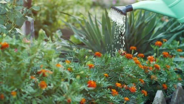 zalévání květin s konev