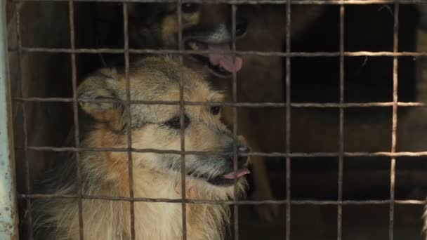 Obdachlose Hunde hinter Gittern