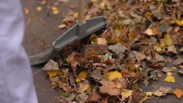 Sweeping yellow leaves