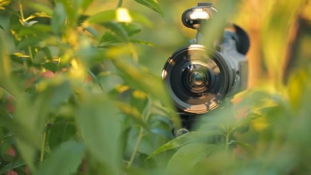 Telecamera Nascosta In Oggetti : Telecamera nascosta nel cespuglio verde u video stock aj k