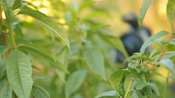 Ehrliche Kamera in grünen Blättern